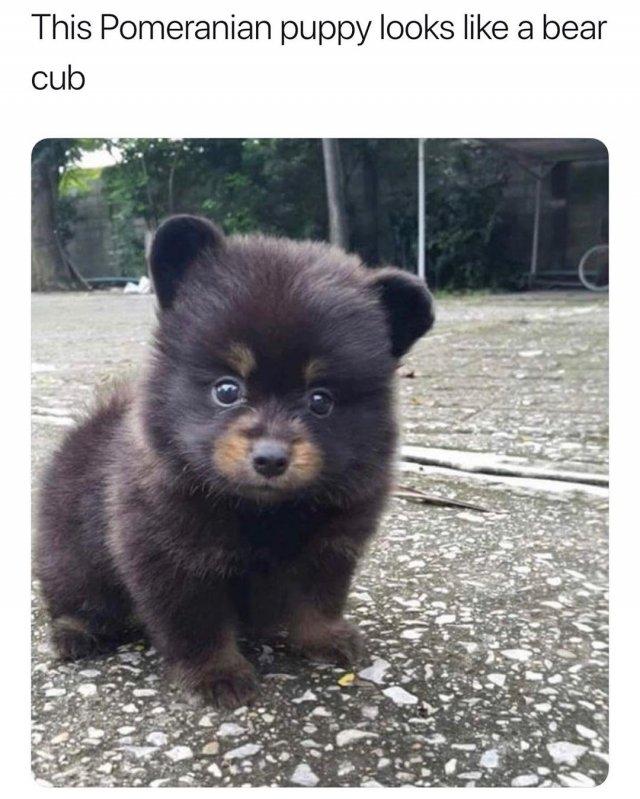 Dog Memes (35 pics)