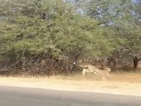 Deers Crossing The Road