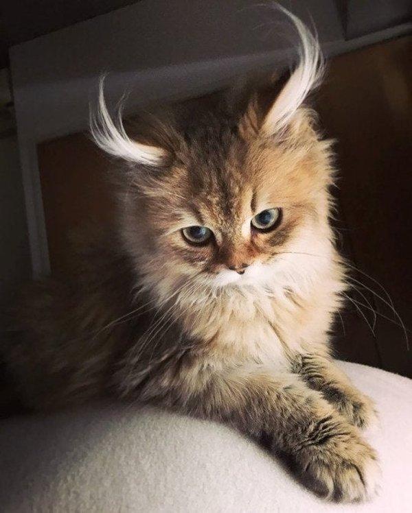 WOW Cats (22 pics)