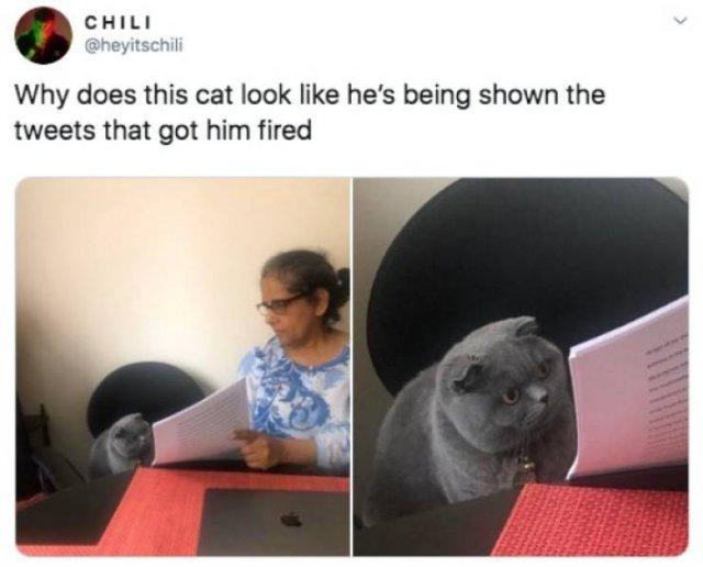 Funny Tweets (53 pics)