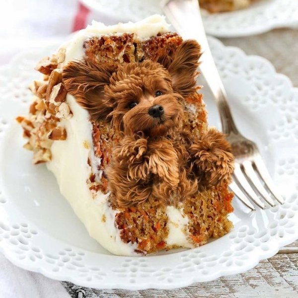 Dogs In Food (30 pics)