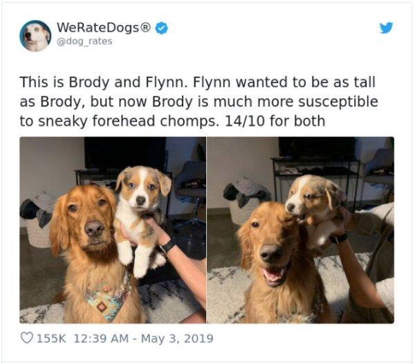 WeRateDogs Tweets (40 pics)