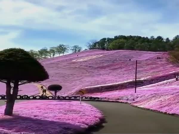 Flowery Landscapes In Hokkaido