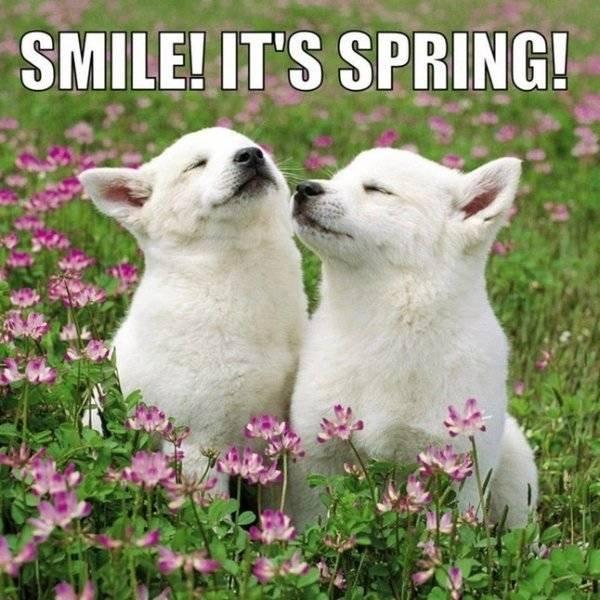 Spring Memes (34 pics)