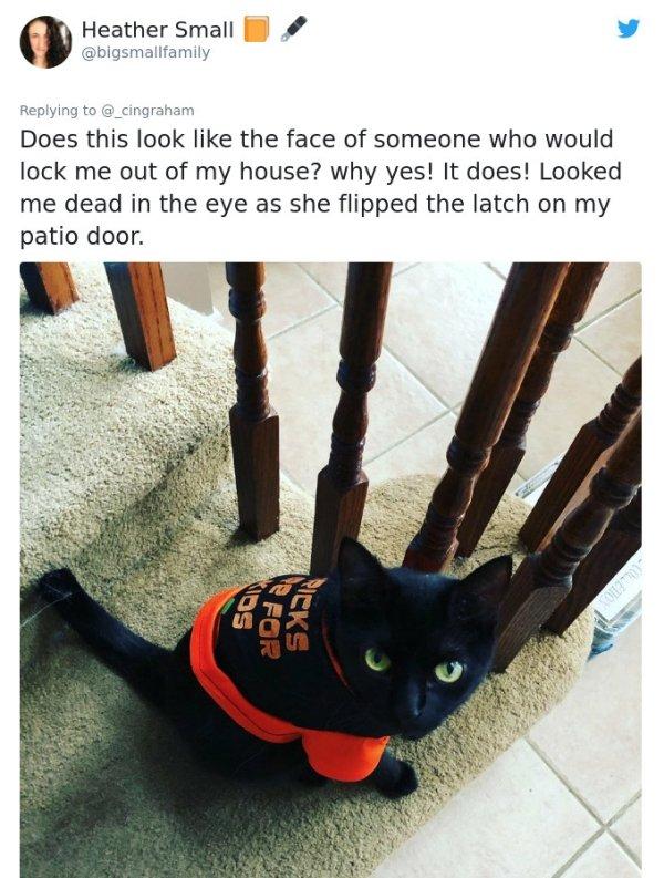 Cats' Stories (33 pics)