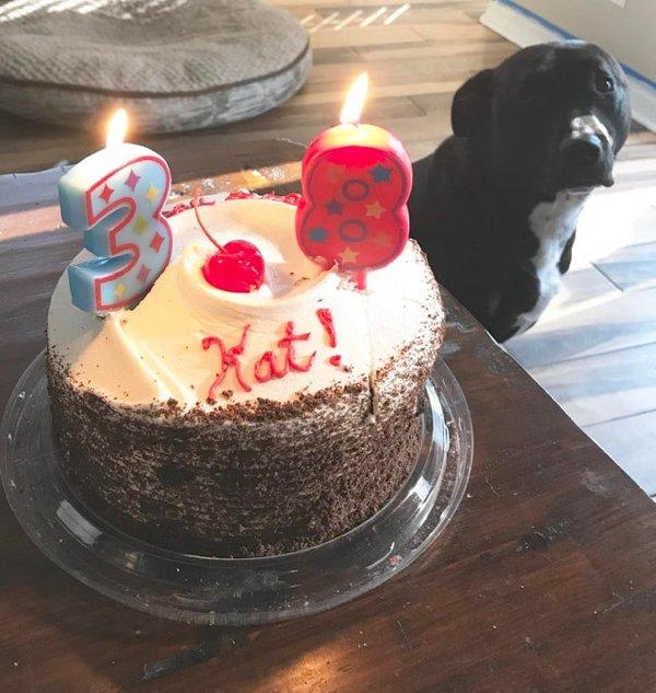 Pets Staring At Food (33 pics)