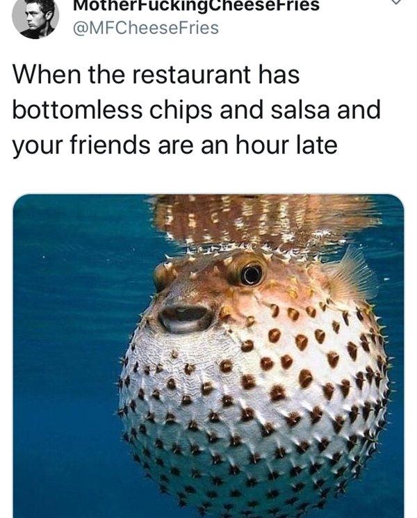 Random Funny Memes (51 pics)