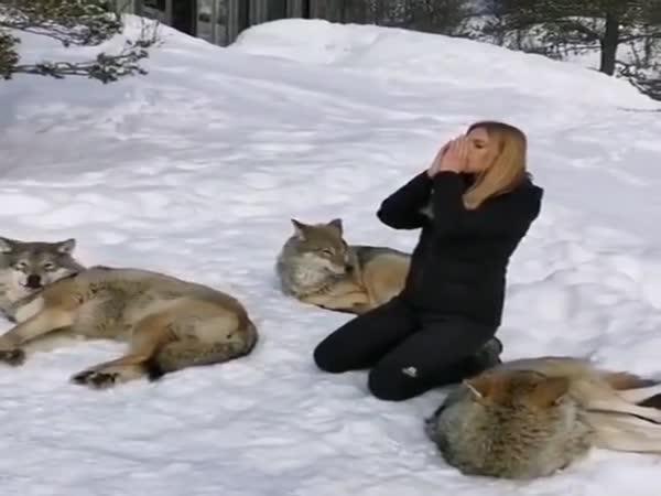 Making Wolves Howl