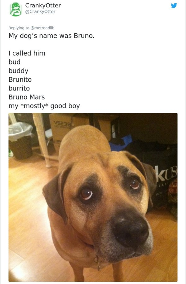 When Your Pet Has Many Names (28 pics)