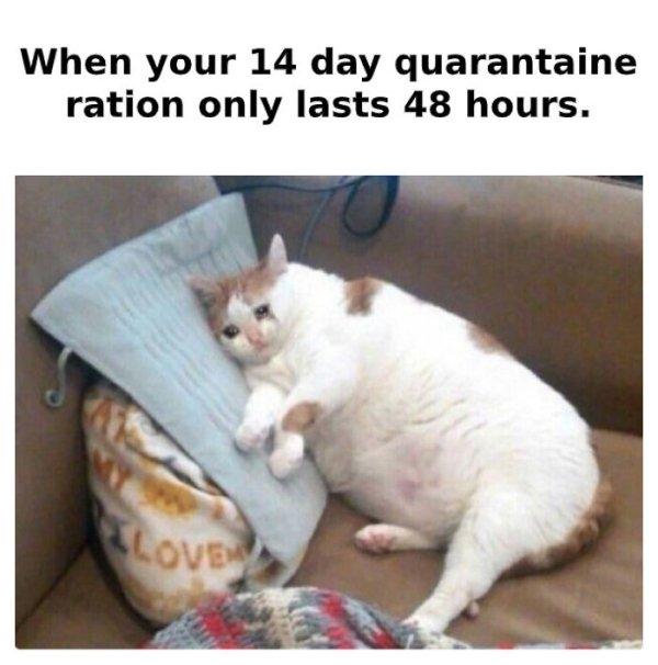 Coronavirus Memes (53 pics)