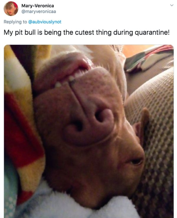 People Share Cool Things That Had Happened During Quarantine (26 pics)
