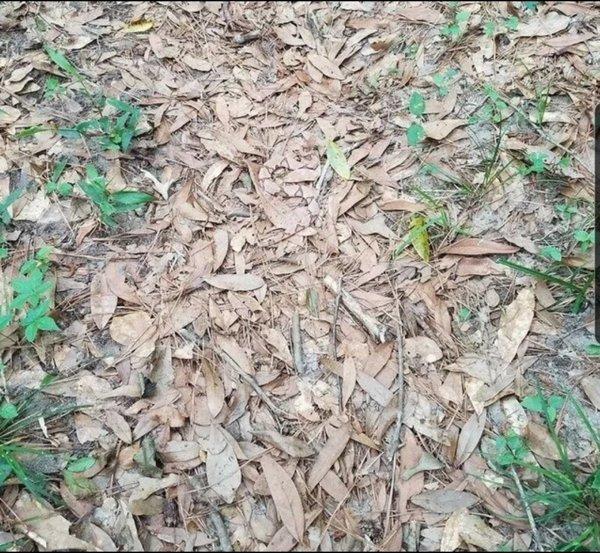 Perfect Camouflage (24 pics)