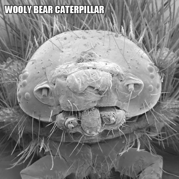 Creatures Under The Microscope (20 pics)