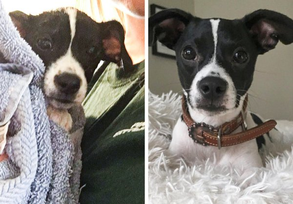 Pets Before And After Adoption (35 pics)
