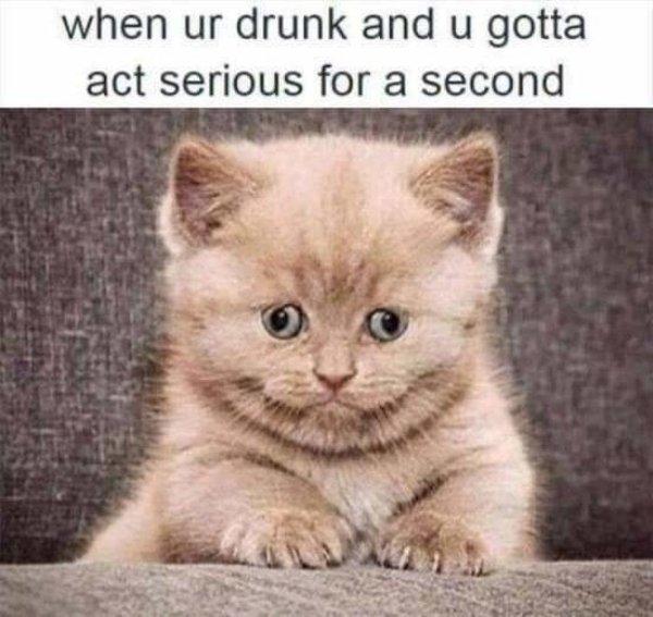 Alcohol Photos (35 pics)