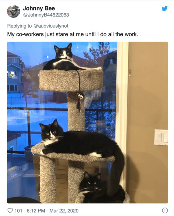 Fluffy Coworkers (33 pics)