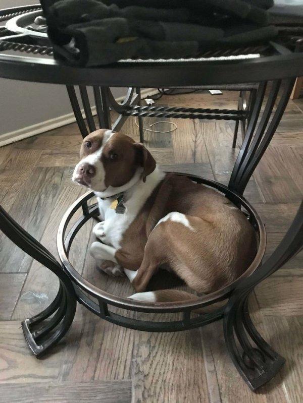 Rescued Pets (37 pics)