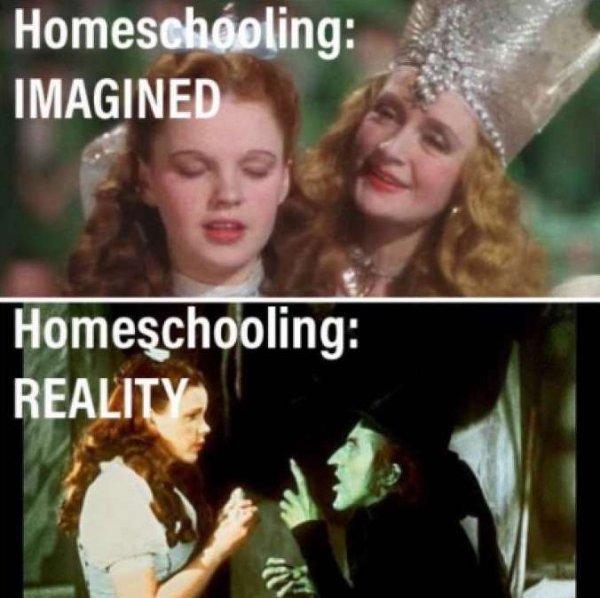 Homeschooling Memes (29 pics)