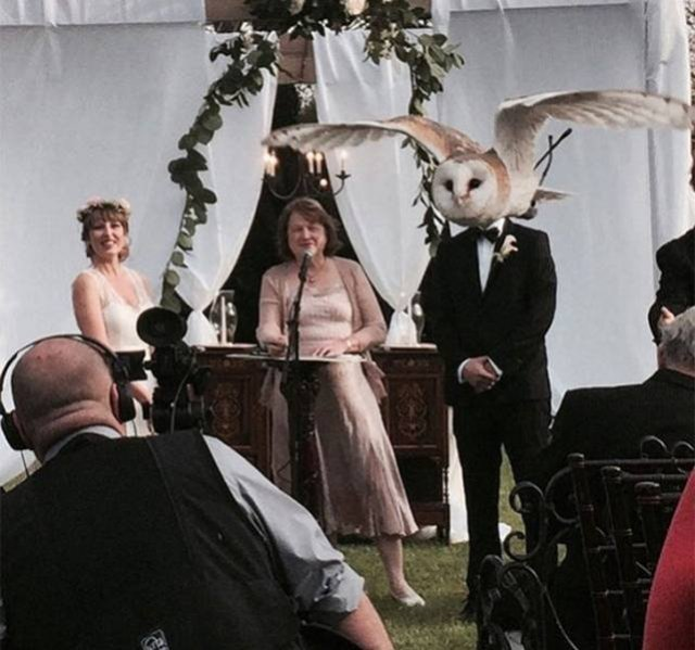 Wedding Situations (18 pics)
