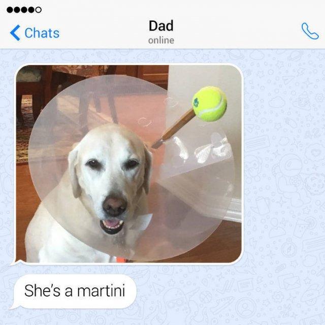 Family Jokes (21 pics)