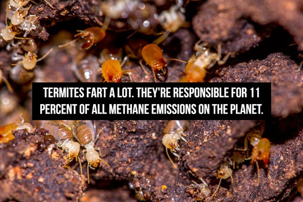 Fart Facts (20 pics)