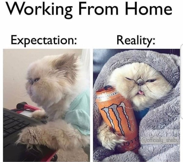 Working From Home Pictures (39 pics)