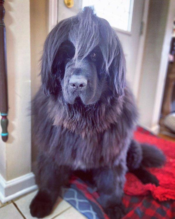تسريحات شعر الكلب في الحجر الصحي (19 صورة)