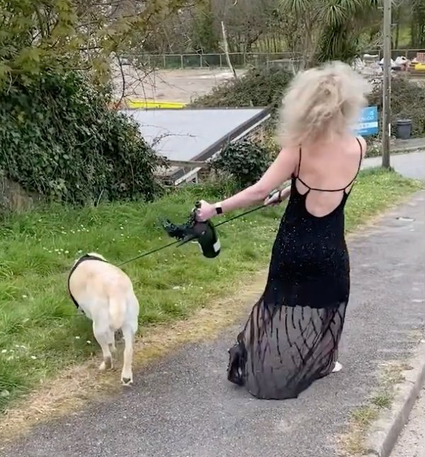 Hilarious Dog-Walking Costumes By Clare Meardon (25 pics)