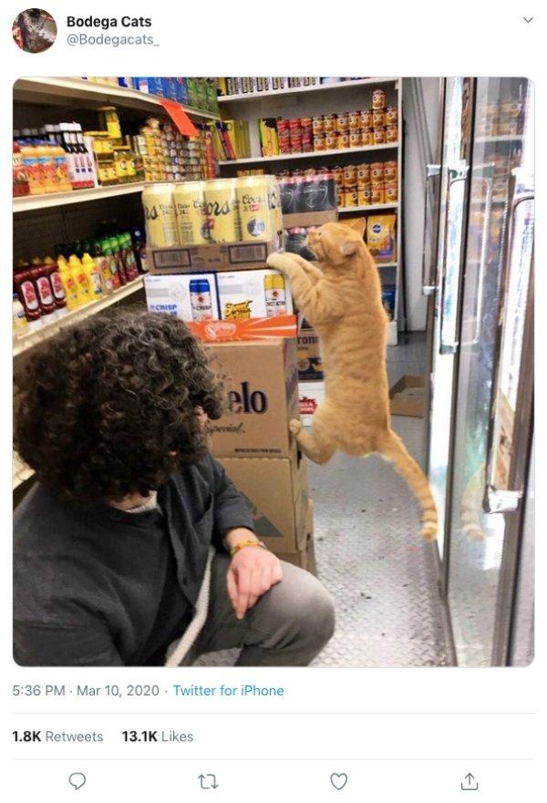Convenience Store Cats (28 pics)