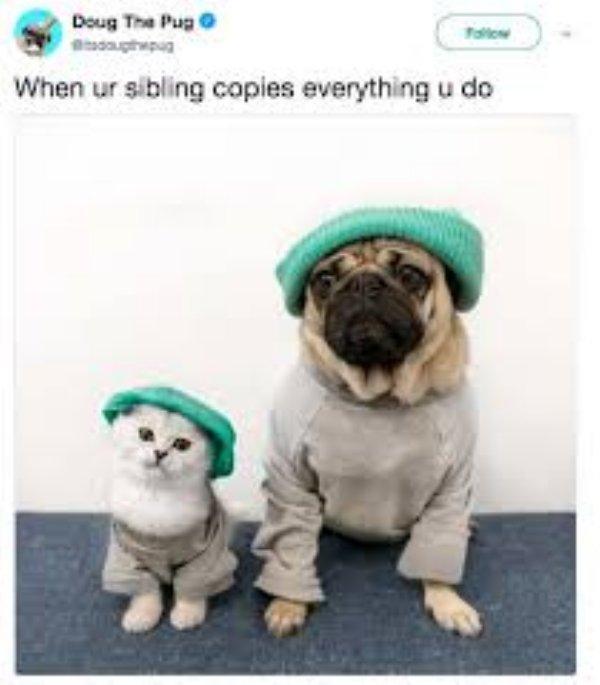 Sibling Memes (38 pics)