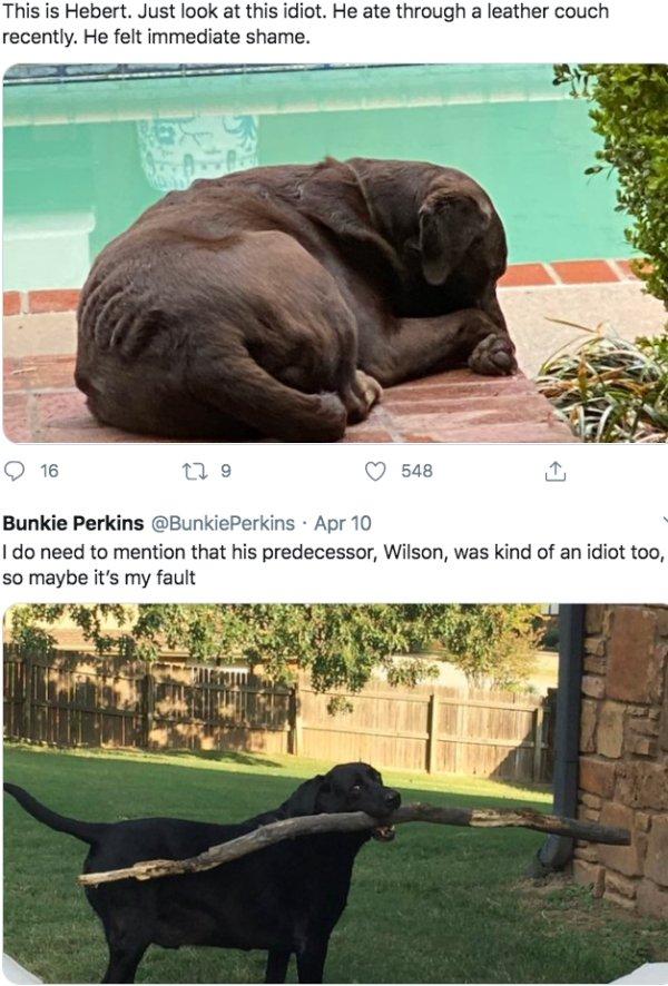 Stupid Dogs (37 pics)