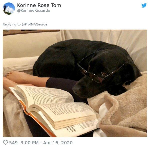 Pets At Work (30 pics)