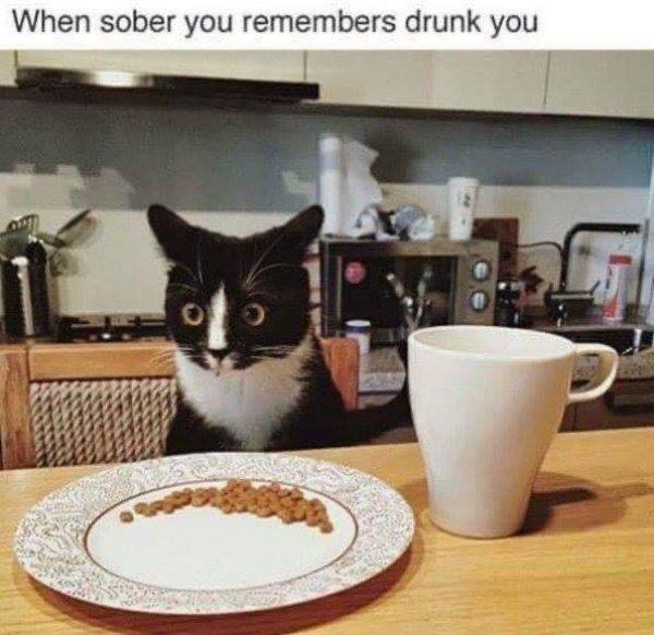 Drunk Memes (34 pics)