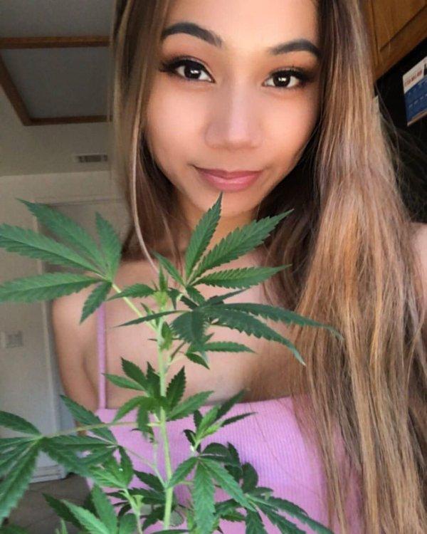 Weed Girls (32 pics)