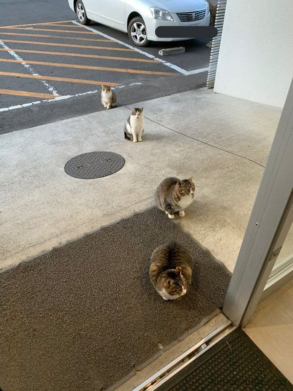 Animals Know Much About Social Distancing (25 pics)