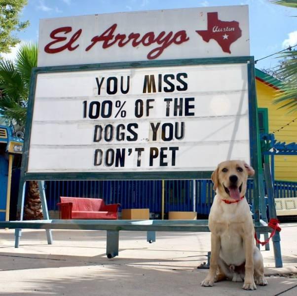 Restaurant Funny Signs (35 pics)