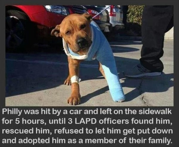 Wholesome Pictures (24 pics)