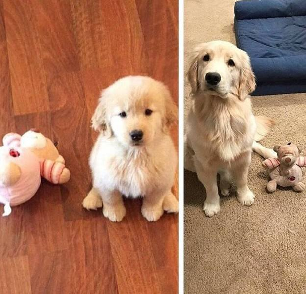 Things Never Change (20 pics)