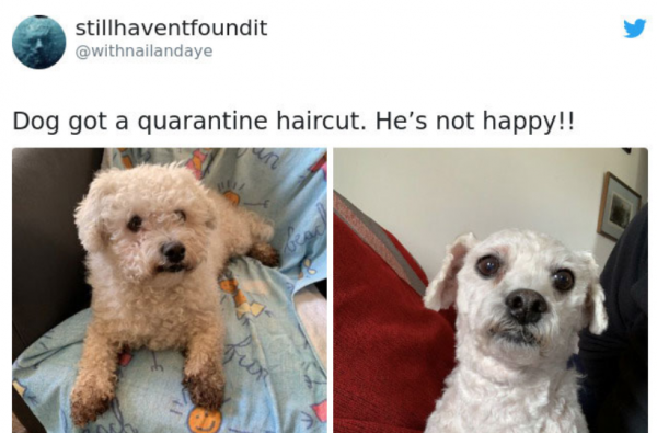 Dog Quarantine Haircuts Made By Their Owners (34 pics)