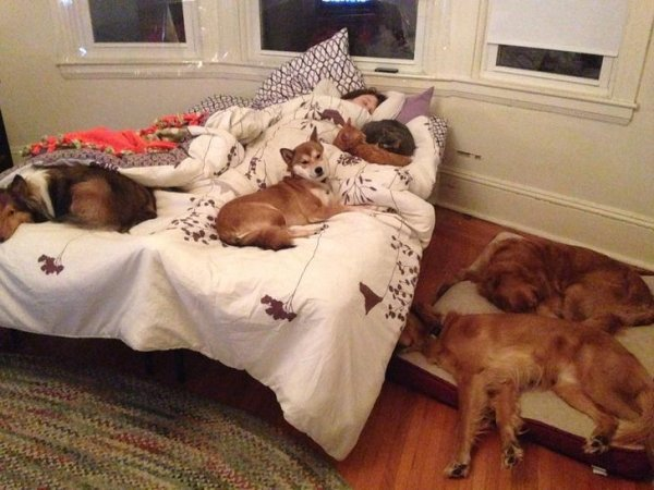 Pets In Beds (29 pics)