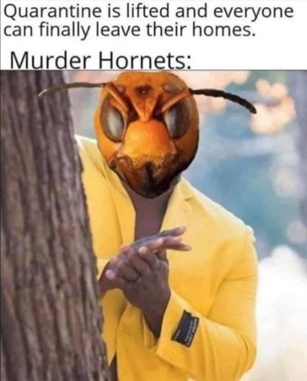 Murder Hornet Memes (29 pics)