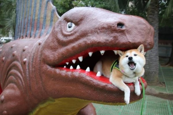 Funny Animals (63 pics)