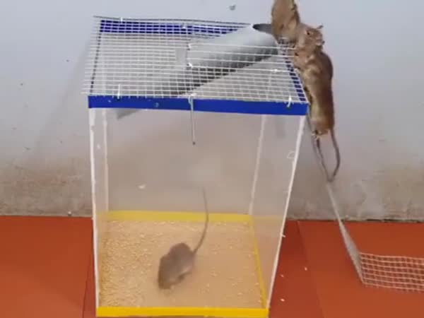 How To Trap Mouse In Plastic Tubes