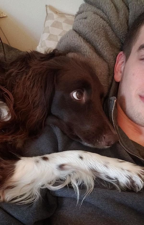 Pets Staring Into Their Owners (37 pics)