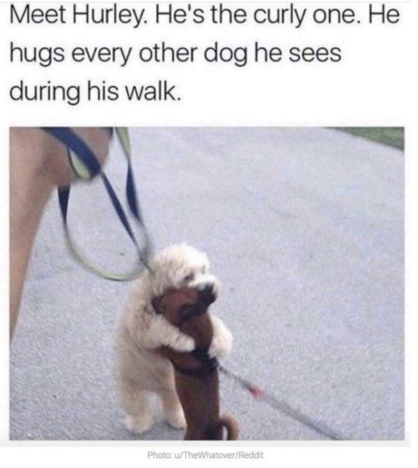 Funny Animals (61 pics)