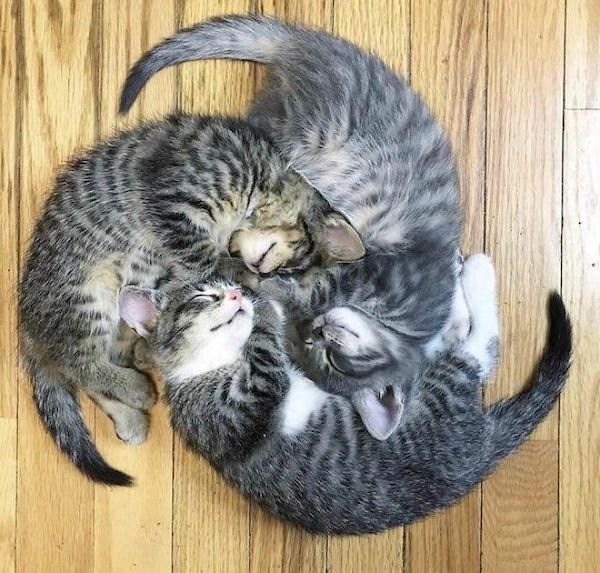 Cute Cats (39 pics)