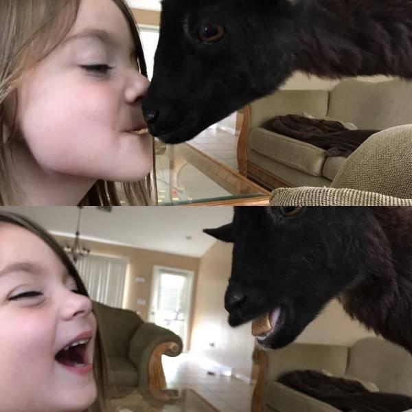 No Words Needed For These Pictures (51 pics)
