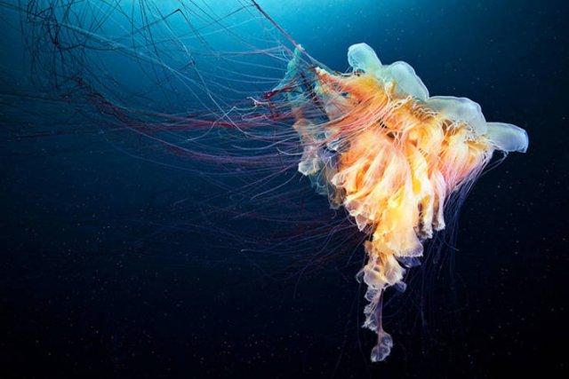 Amazing Underwater Creatures (30 pics)