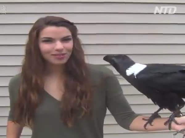 Can Ravens Speak?