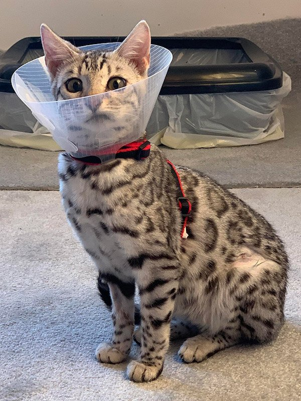 Pets In Lampshades (35 pics)
